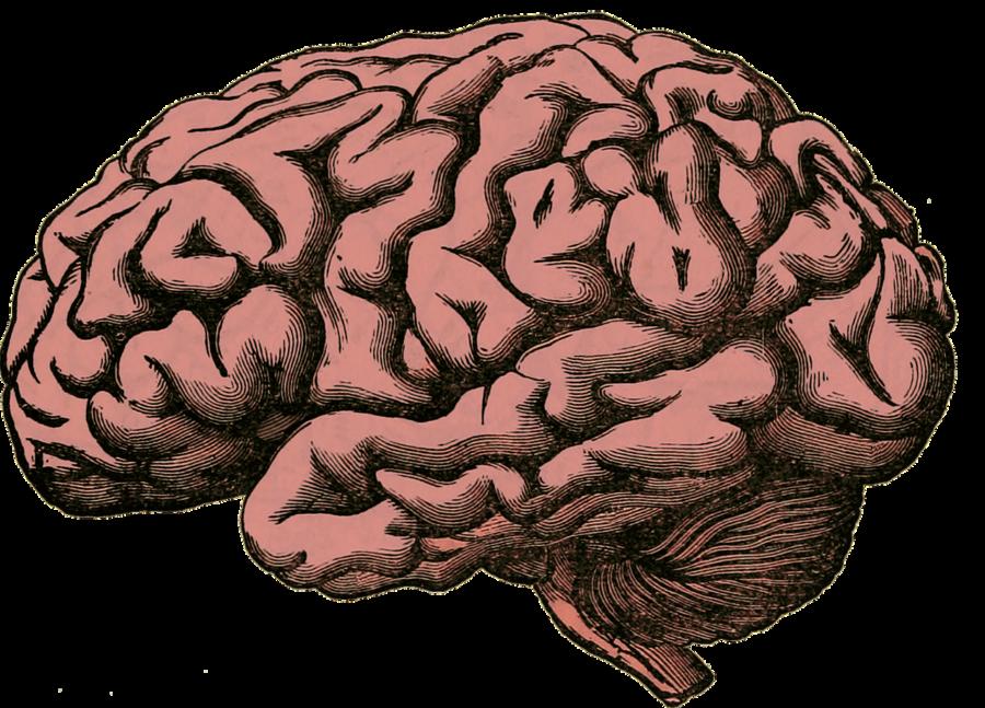 cervello di un umanista